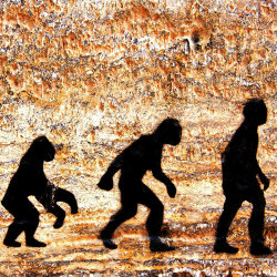 image of man evolution