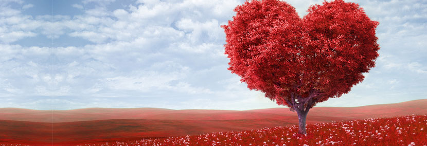 image of loveheart tree in the red grass