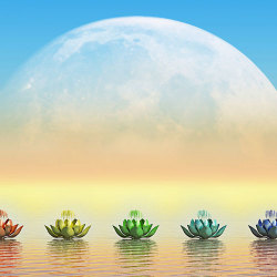 image of the transform of the lotus flower in different colours