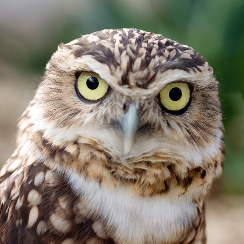 image of a wise owl looking at the camera