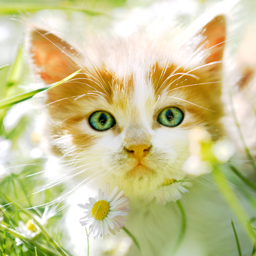 image of a cute tabby kitten playing in the long grass