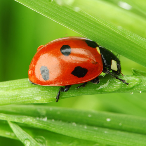 image of a lady bug on a bright green leaf