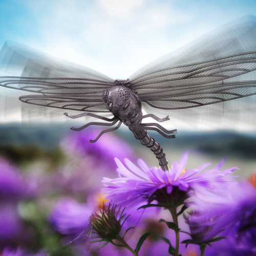image of a dragonfly hovering over beautiful purple flowers