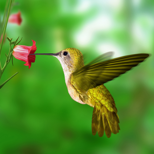 image of a beautiful hummingbird eating from a bright pink flower