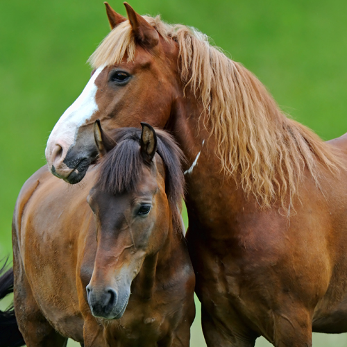 image of a mare mothering her baby foal
