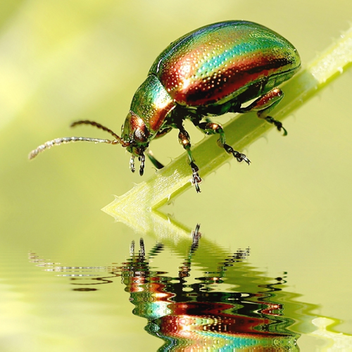 image of a beautiful green and red beetle sending an animal totem message