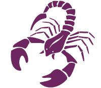 image of a scorpion representing the scorpio starsign