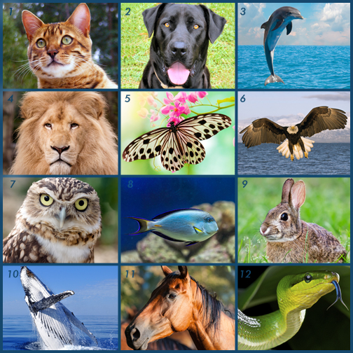 images of 12 animals to discover your personality